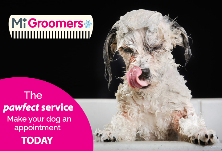 Dog Grooming In Melton Mowbray The Crescent Veterinary Clinic